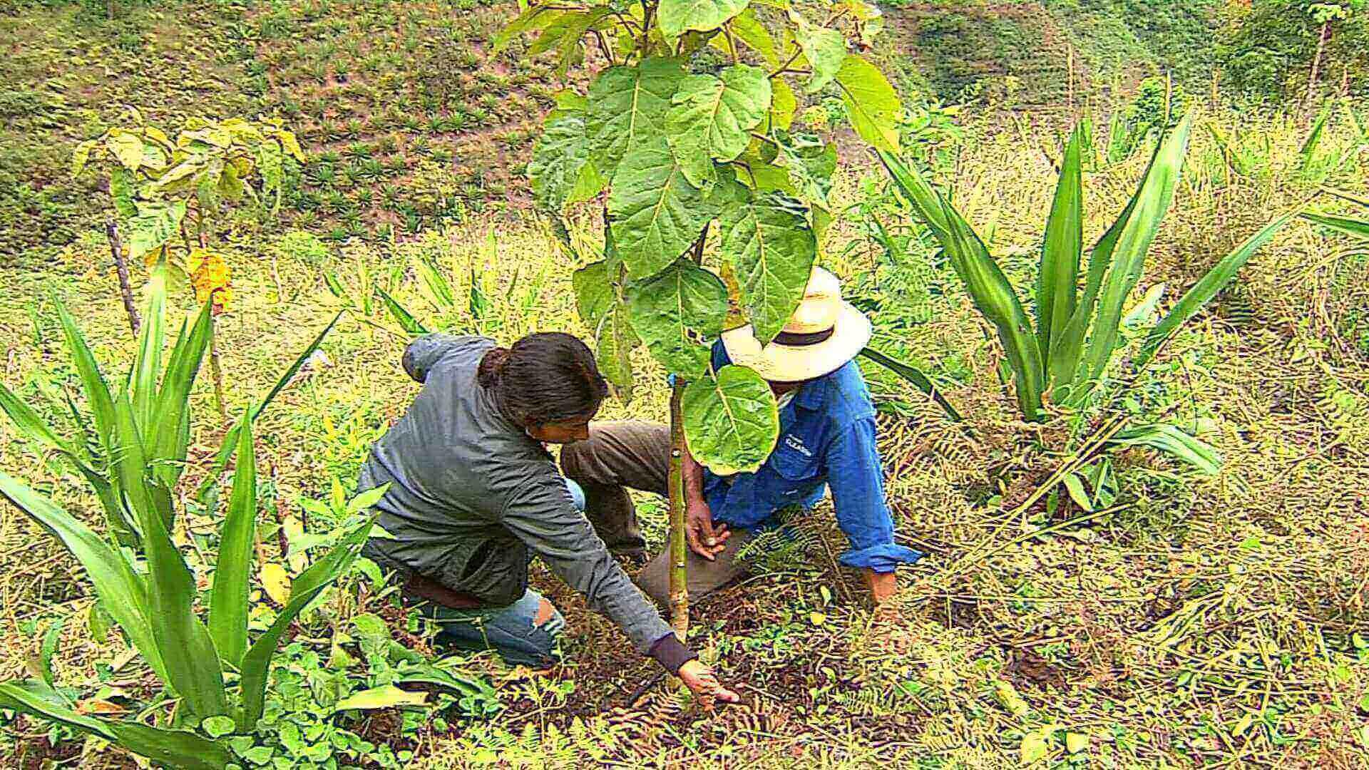 Buscan potenciar exportaciones agrícolas