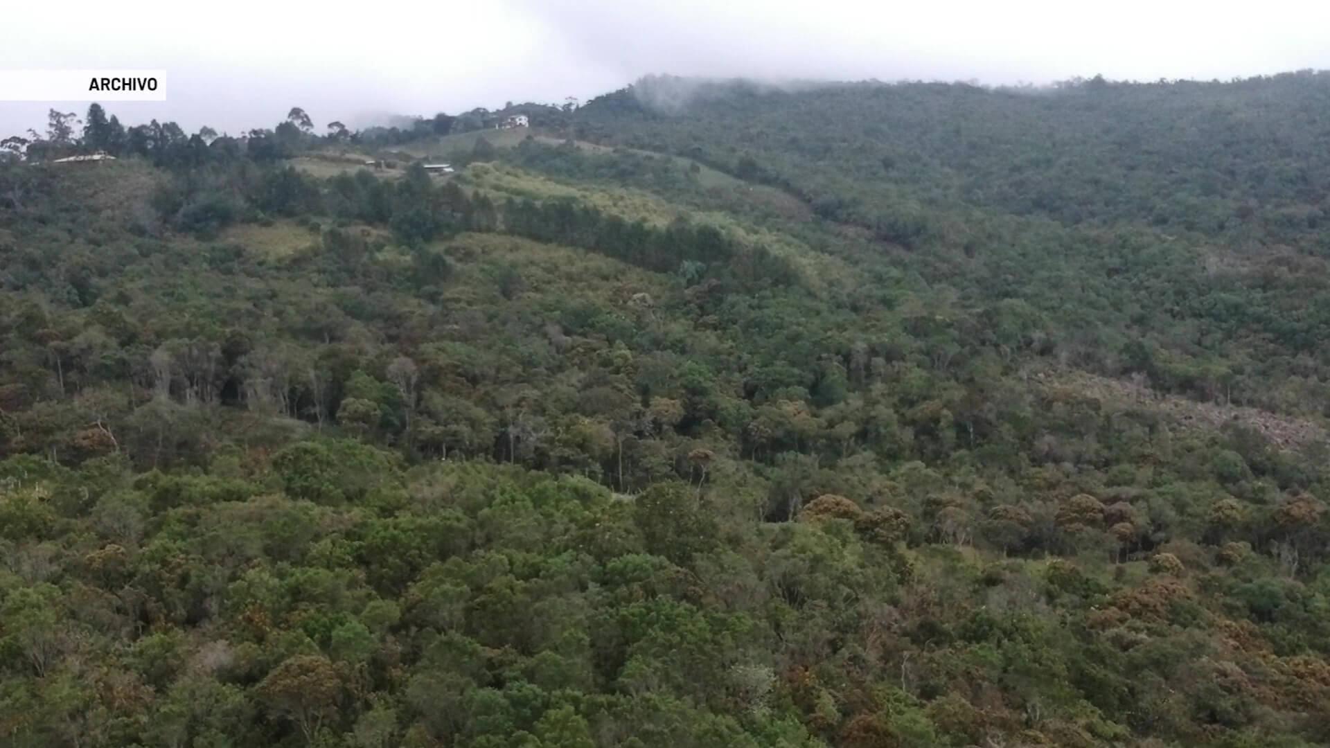 Conservación de más de 42 hectáreas de bosques nativos