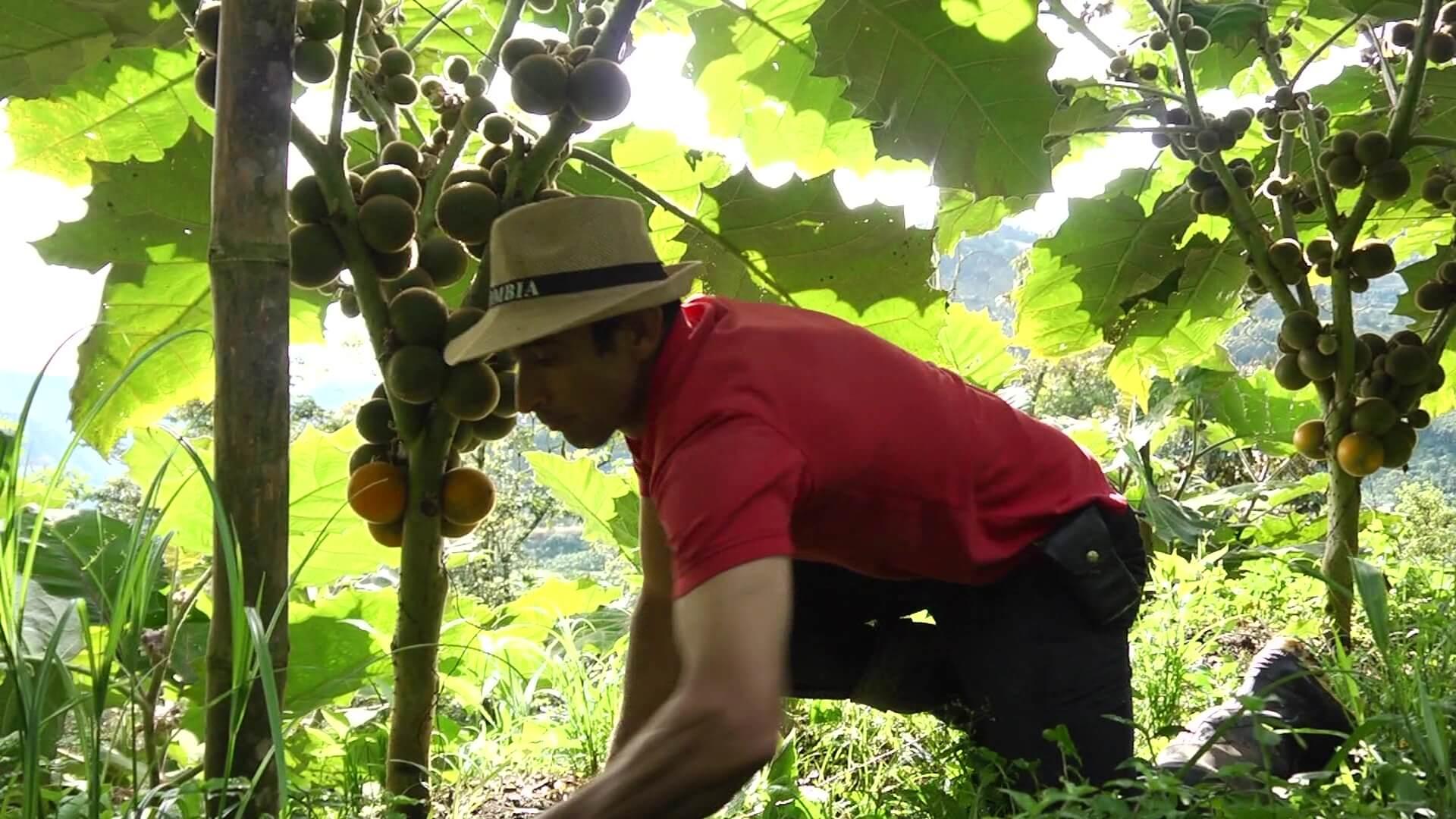 Antioquia le apuesta a una alimentación más sostenible