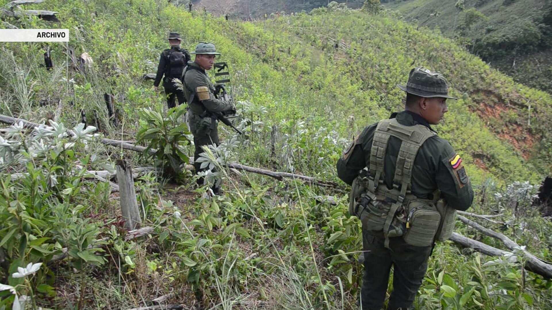 Antioquia tiene el 25 % del total de cultivos de coca