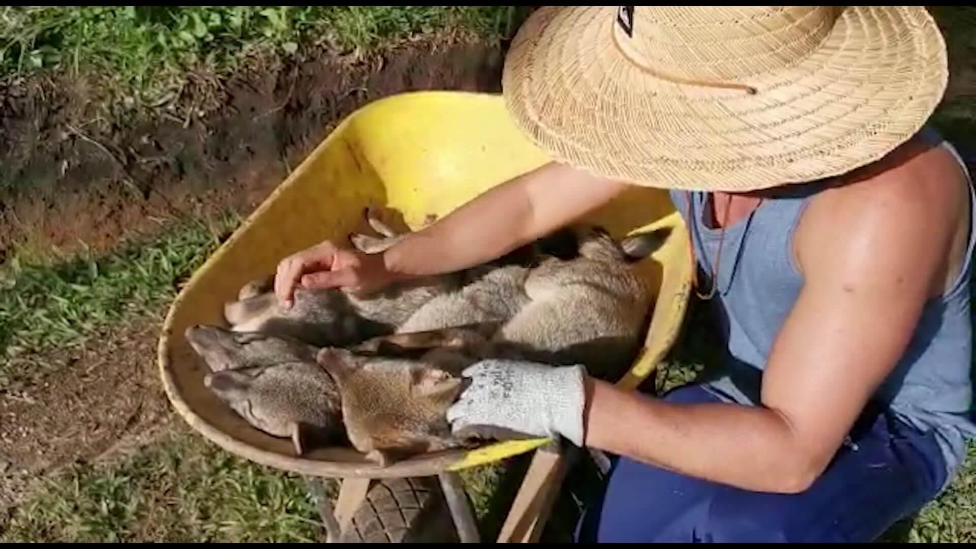 Cuatro zorros muertos por posible envenenamiento