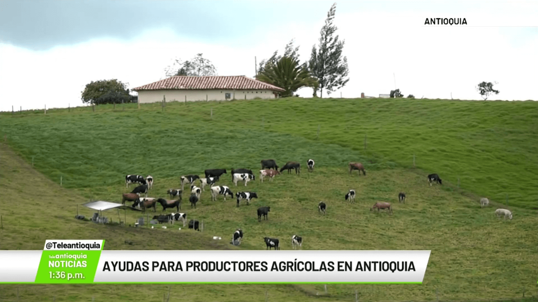 Ayudas para productores agrícolas en Antioquia
