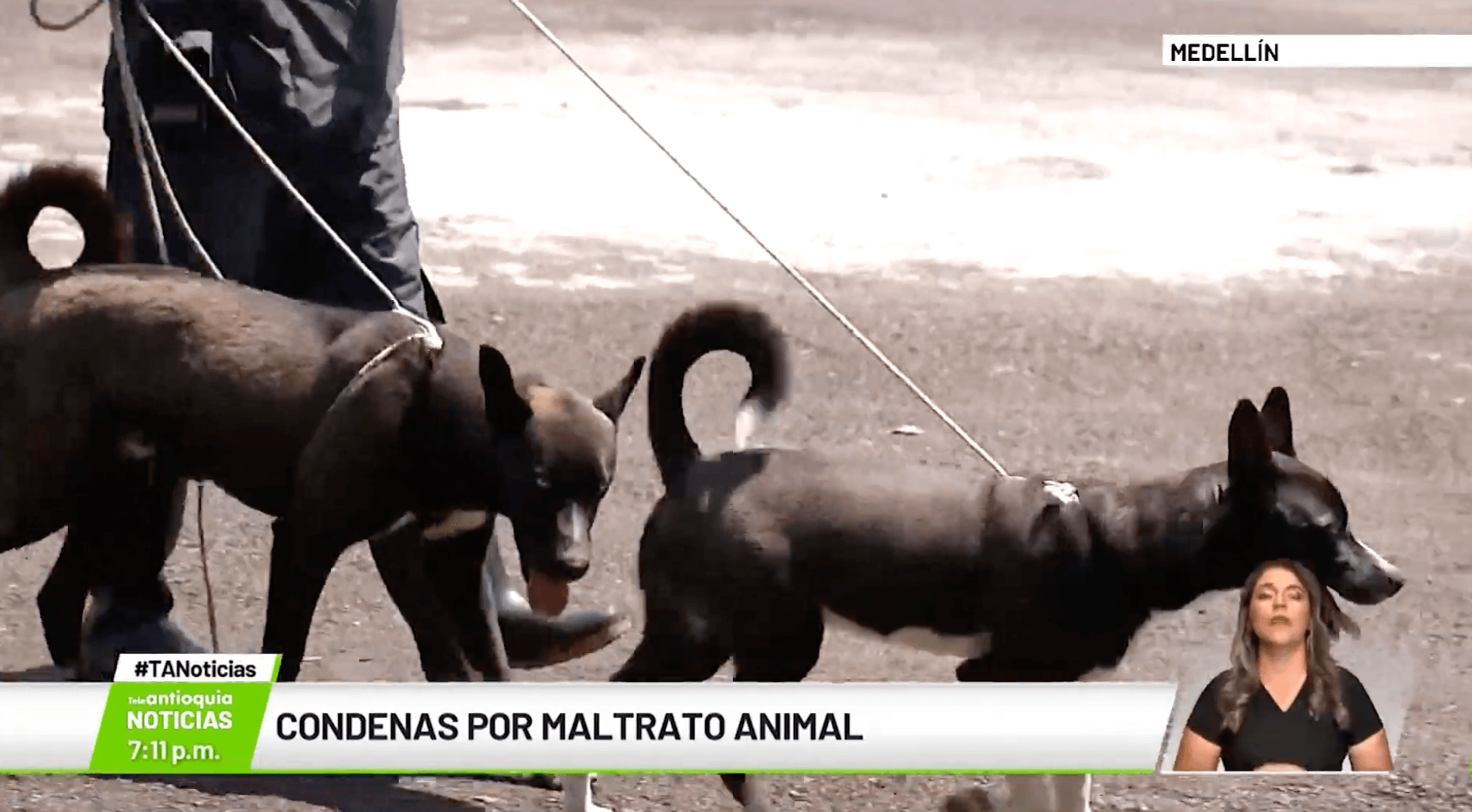 Condenas por maltrato animal