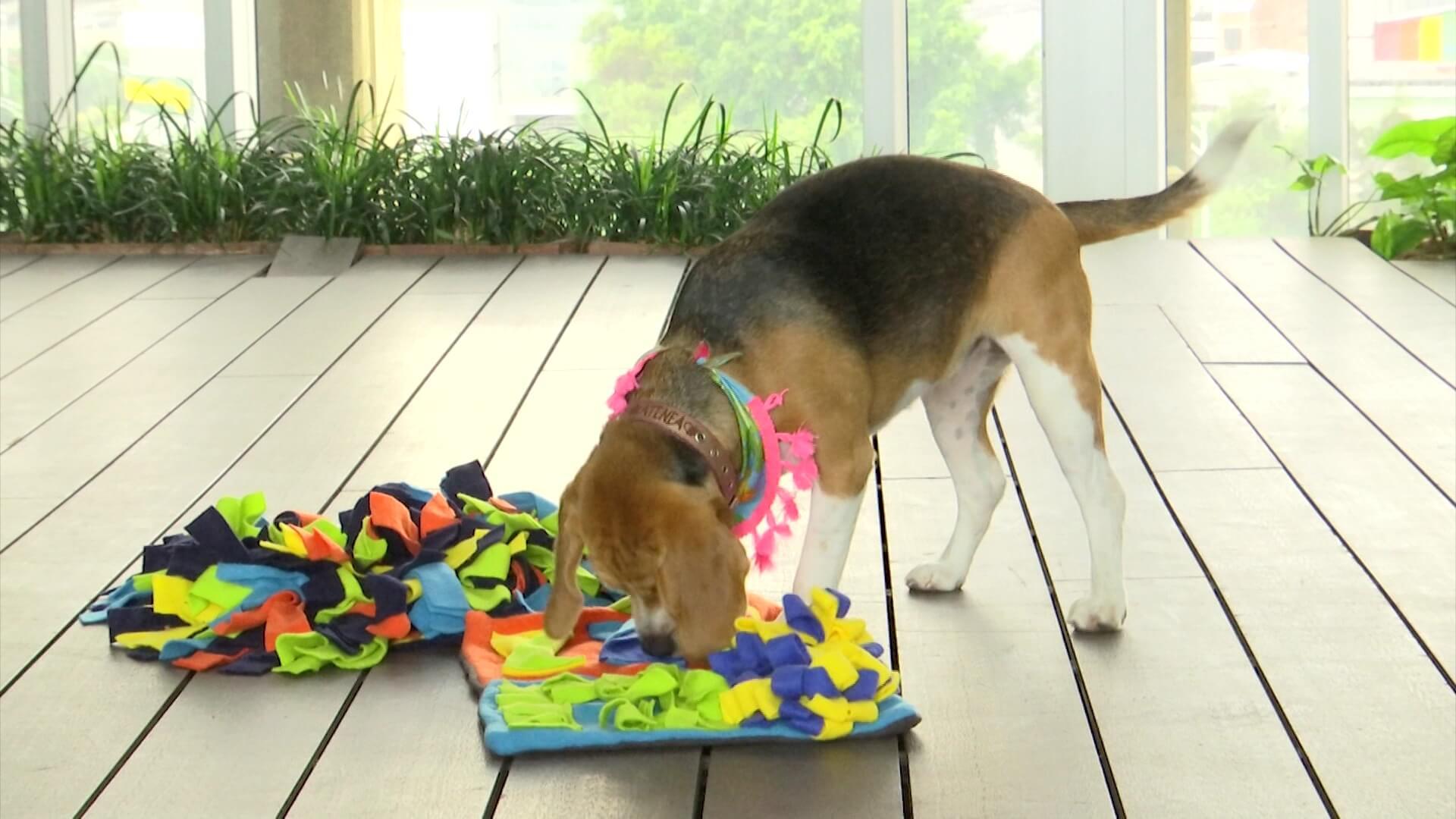 Los juguetes cognitivos tienen beneficios para las mascotas