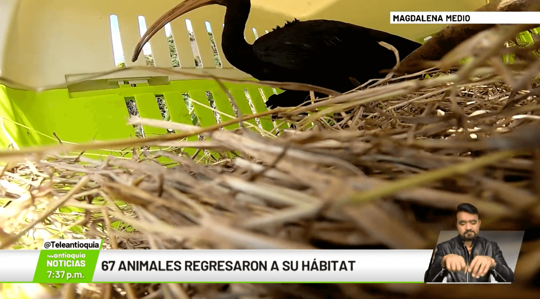 67 animales regresaron a su hábitat