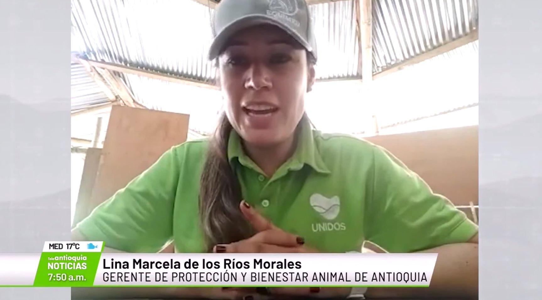Lina Marcela de los Ríos, gerente de protección y bienestar animal de Antioquia.