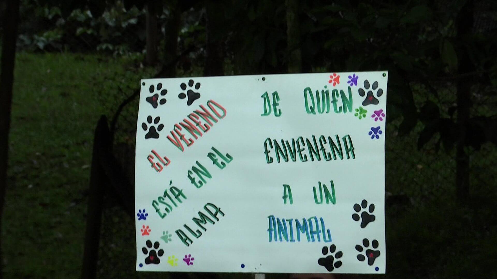 Solidaridad tras envenenamiento de tres mascotas