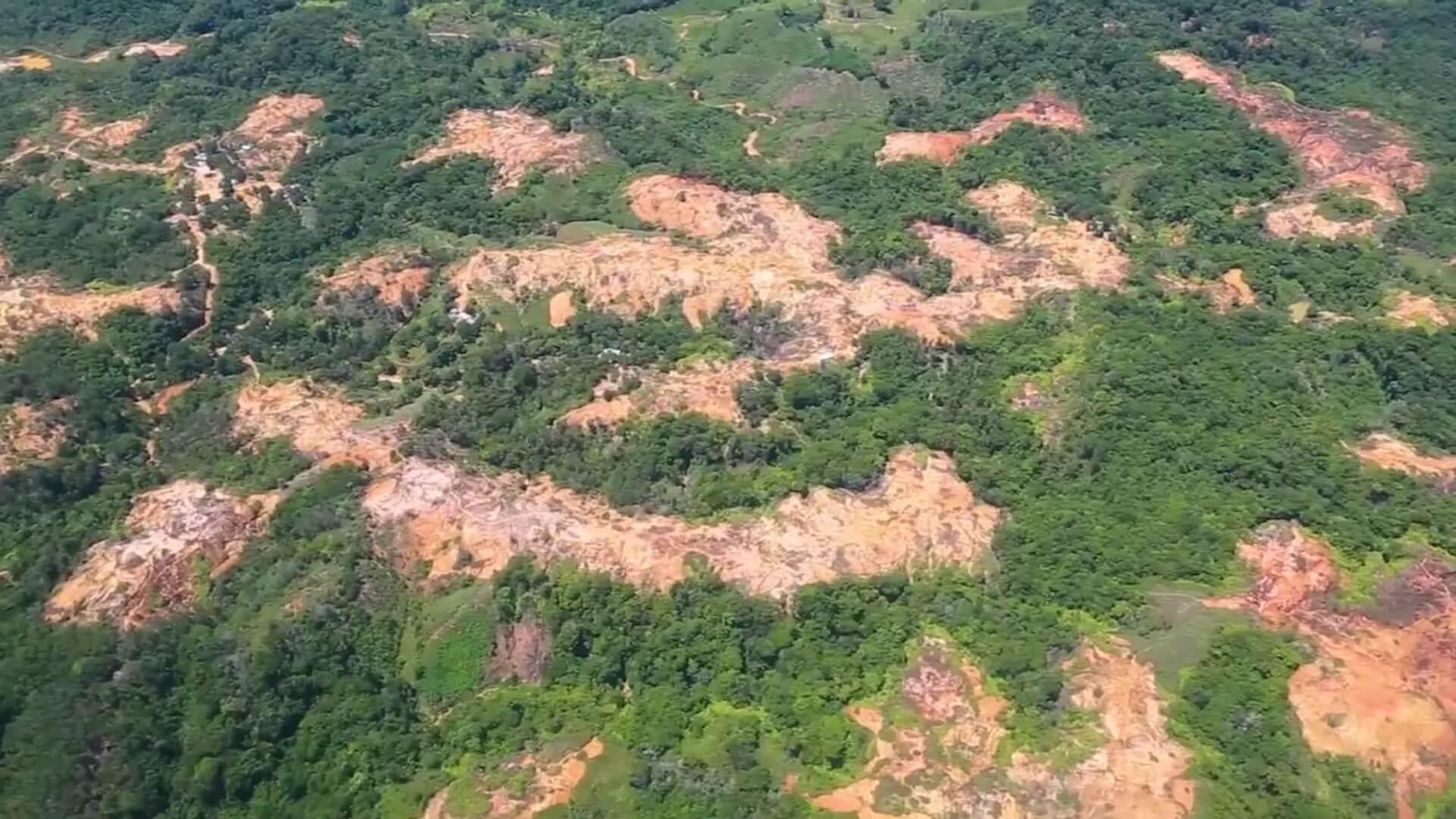 10 mil millones de pesos para la reforestación en Bajo Cauca