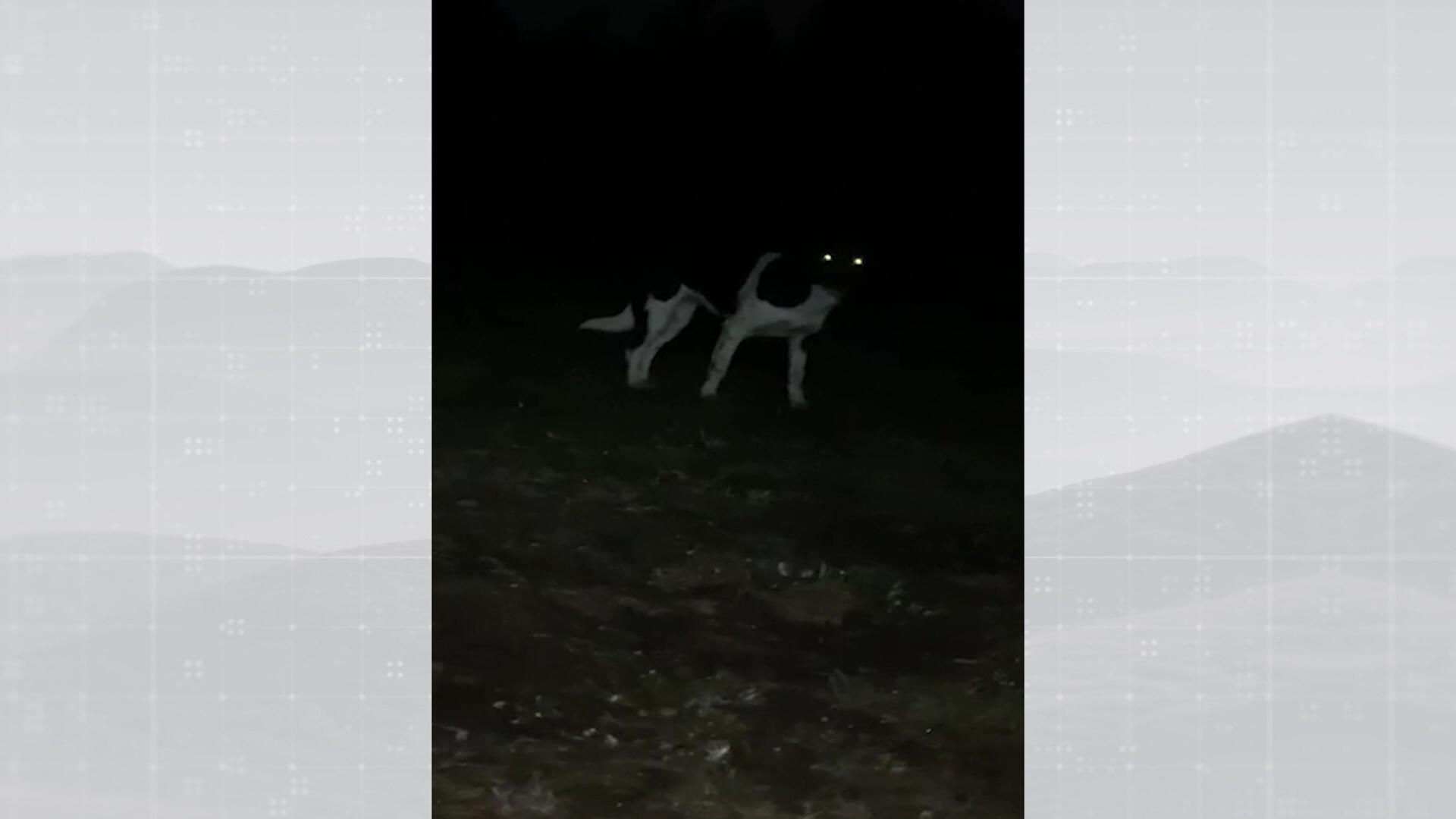 Perros ferales de cazadores a cazados