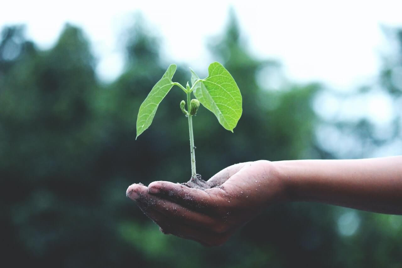 La vida después de la vida: ¿convertir una mascota en una planta o en un árbol?